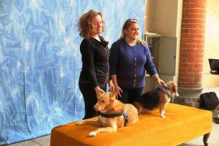 HUMAN DOG 2018; La Mostra al Castello Sforzesco