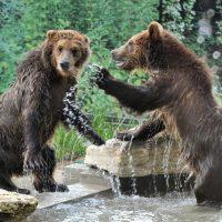 Convivere con gli orsi, in sicurezza: guida pratica della LAV