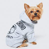 Moschino e H&M presentano una collezione dedicata agli animali