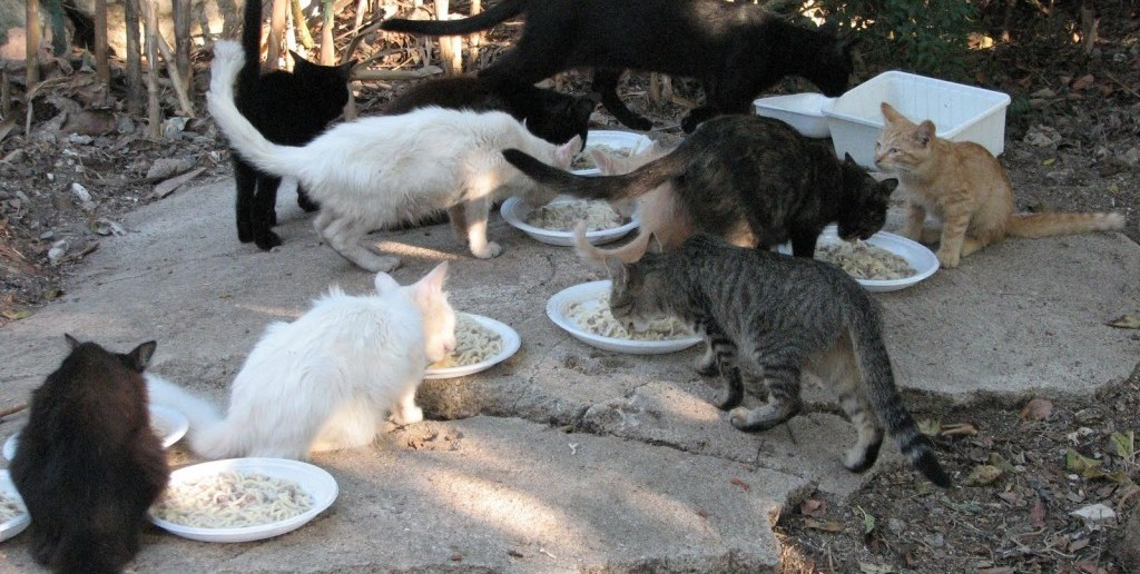 Cacciati i Gatti dal Cortile di una Scuola Materna a Viareggio