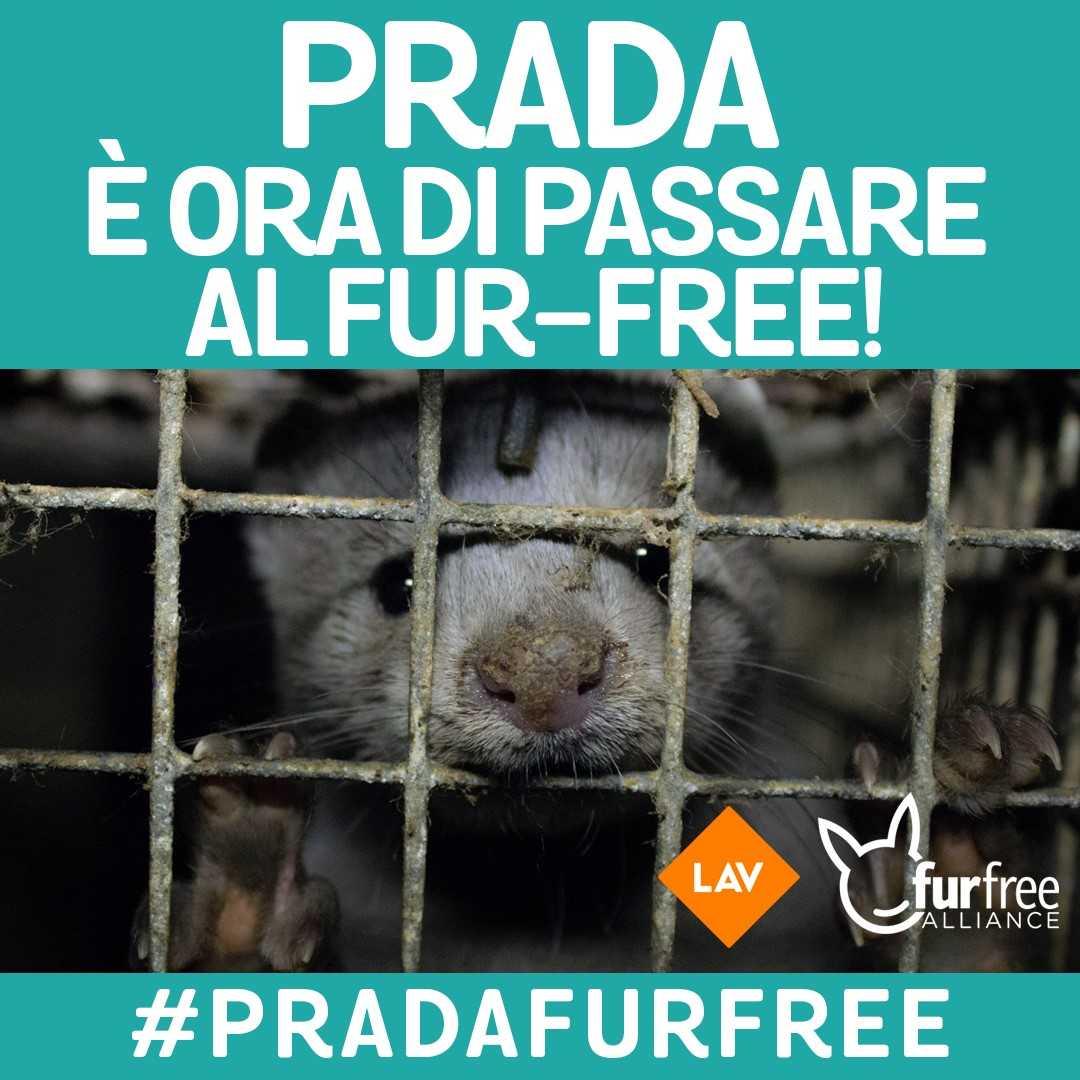 #PRADAFURFREE - PRADA NEL MIRINO DELLE ASSOCIAZIONI ANIMALISTE PER L'USO DELLE PELLICCE