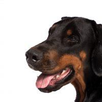 L'ENCI in difesa dell'identità del cane