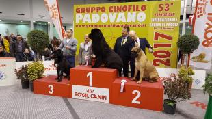 55^ Esposizione Internazionale Canina di Padova