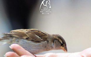 I consigli di LNDC per aiutare gli uccellini durante l'inverno