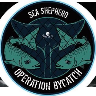 La SAM SIMON di Sea Shepherd arriva in Francia per unirsi alla campagna contro il massacro di delfini