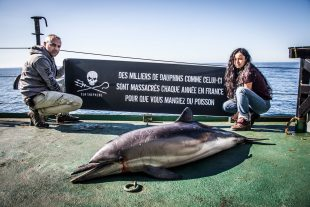 Sea Shepherd France documenta la morte dei Delfini sulla costa atlantica della Francia