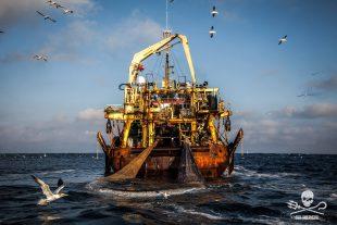 Un super-peschereccio rompe i Regolamenti Internazionali di Collisione Marittima (COLREGS) cercando di intimidire Sea Shepherd