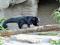 Al Bioparco è arrivata Arabella, l'orso gatto!!!