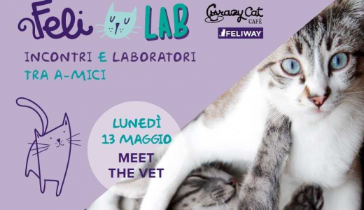 FELI_LAB al Crazy Cat Cafe' di Milano