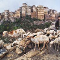 ANIMALS di Steve McCurry al Centro Saint-Bénin di Aosta