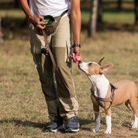 Cane Urbano, meglio se educato!
