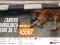 Con un SMS al 45587 partecipi alla raccolta fondi per un'ambulanza veterinaria