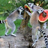 Animali delle Stelle – quest'Estate al Bioparco di Roma