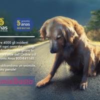 Se incontri un animale abbandonato chiama il numero verde ProntoAnas 800841148