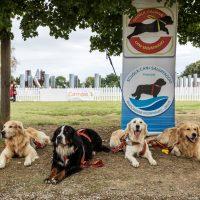 Follow Your Pet; protagonisti  i cani eroi!