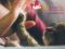PetAperitivo con l'Esperto per cani e gatti, durante la Milano Pet Week