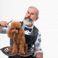 7 Cose da fare oggi, Giornata Internazionale del Cane