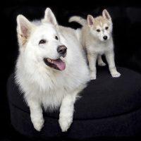 5 motivi per i quali non regalare un cane a Natale