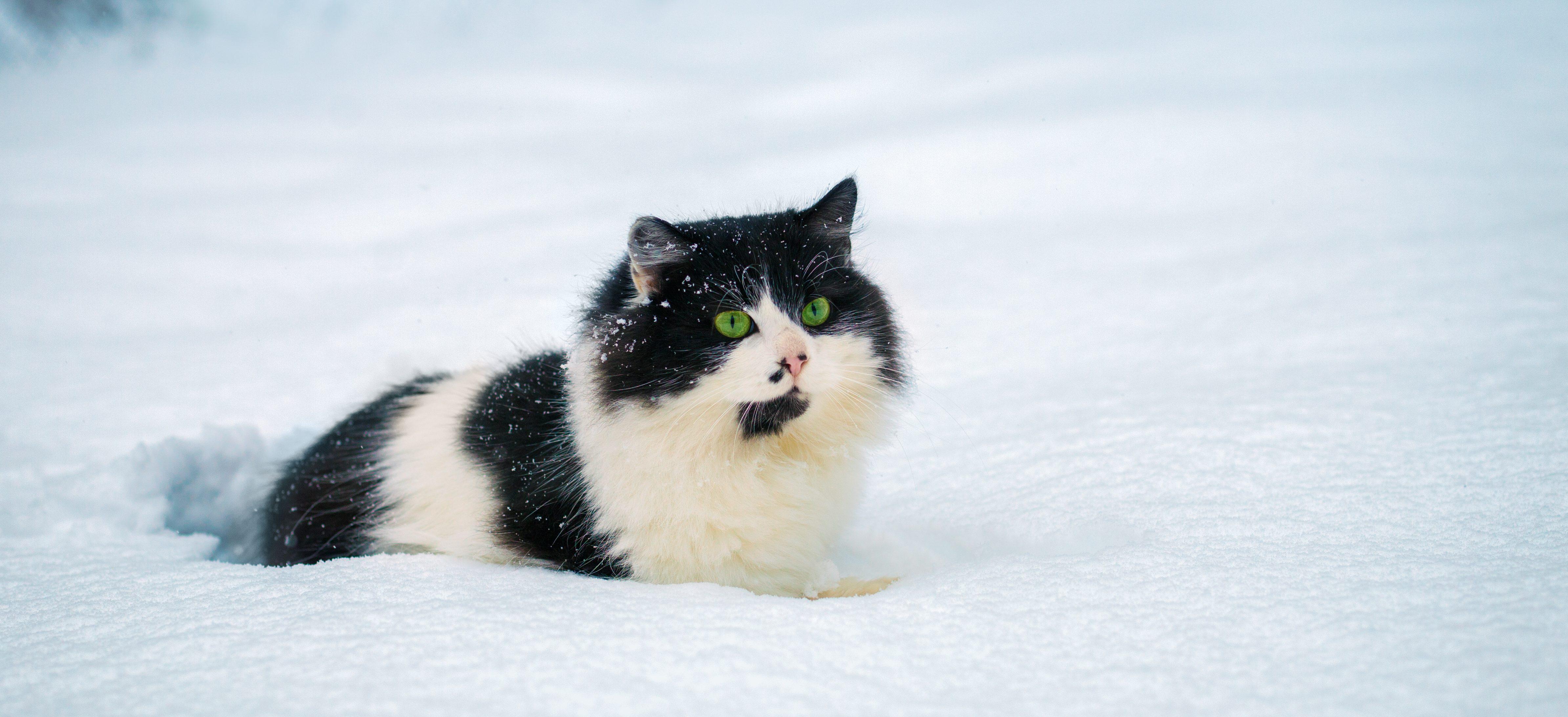 10 Consigli su come comportarsi, con i propri animali, nei periodi dell'anno più freddi, a cura della LNDC