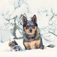 DIECI CONSIGLI SU COME COMPORTARSI CON I PROPRI ANIMALI NEI PERIODI PIÙ FREDDI DELL'ANNO (LDNC)