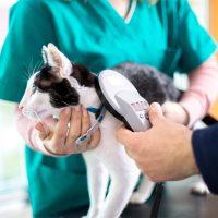 Lombardia obbligatorio microchip per i gatti