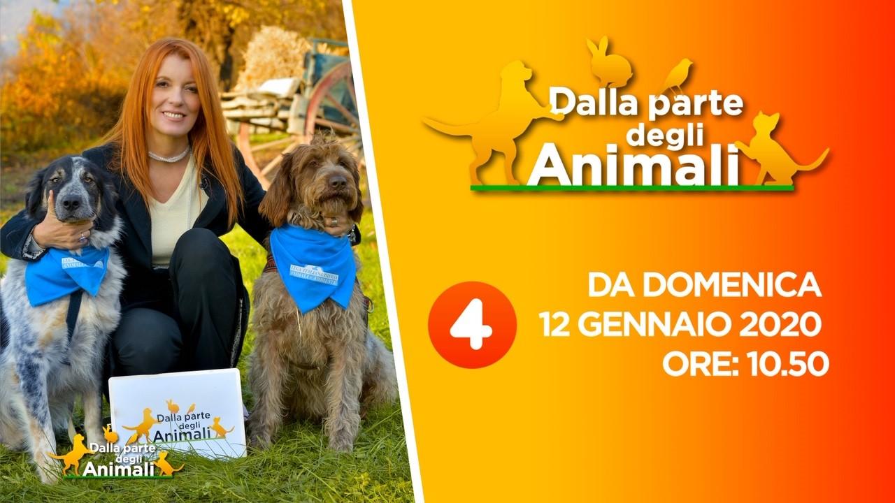 """TV:TORNA SU RETE4 """"DALLA PARTE DEGLI ANIMALI"""", L'APPREZZATA TRASMISSIONE IDEATA E CONDOTTA DA MICHELA VITTORIA BRAMBILLA"""