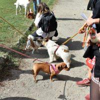 Milano: Approvato il nuovo Regolamento per il benessere e la tutela degli animali