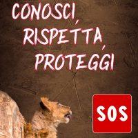 Emergenza al Safari Park Lago Maggiore