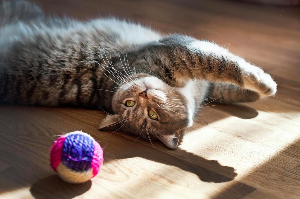 #IoRestoaCasa con il gatto: i suggerimenti del Veterinario Esperto in Comportamento Animale