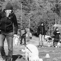 In Italia 80.000 avvelenamenti di cani nel 2019: nasce il progetto  IREBA-19