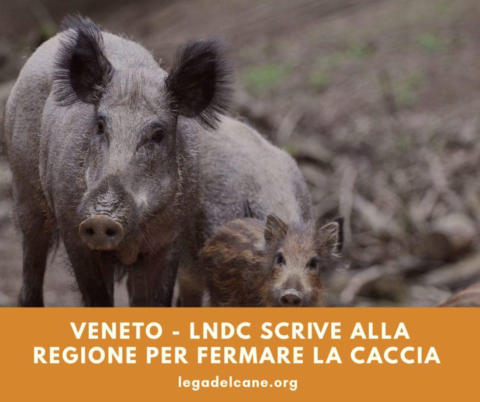 LNDC scrive alla Regione per fermare la caccia in Veneto