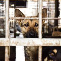 Animal Equality; chiudiamo per sempre i Wet Market