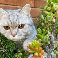 PODCAST: Mara Di Noia e le Piante Nocive per gli Animali Domestici