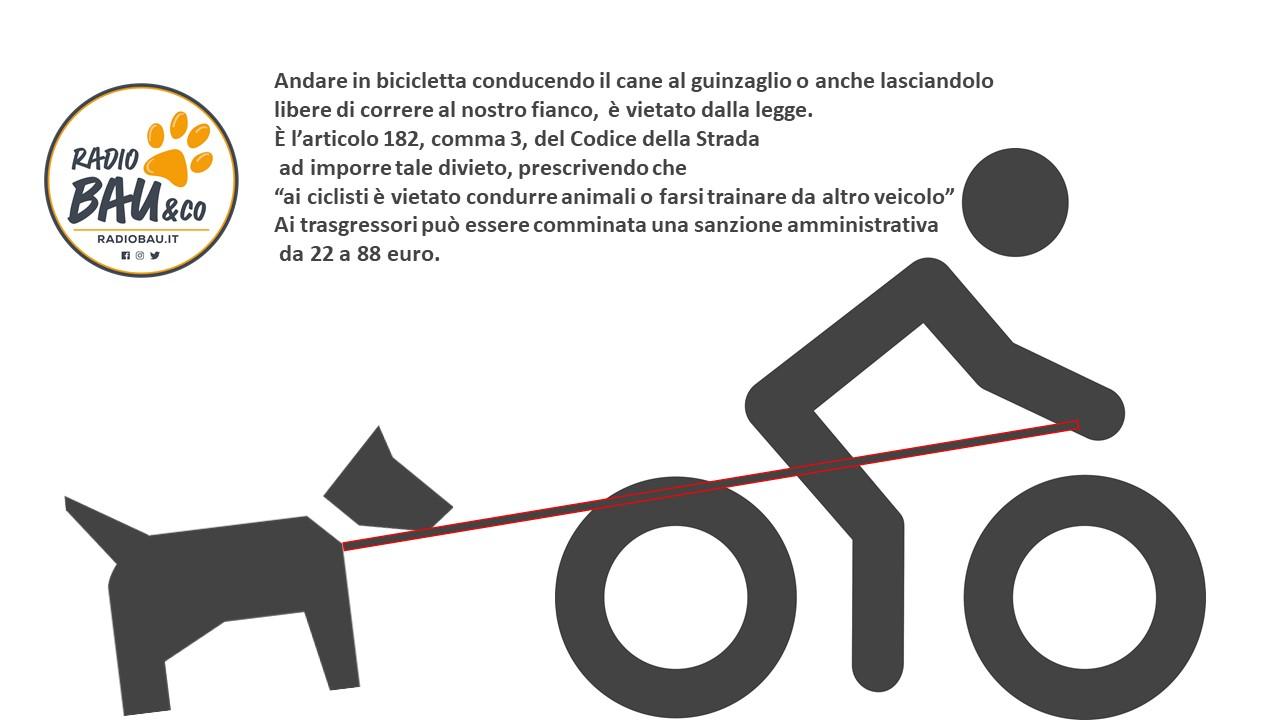 In Bicicletta Senza Cane al seguito!
