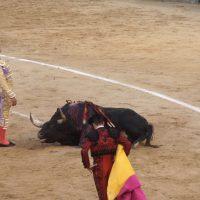 INVESTIGAZIONE INTERNAZIONALE LAV SULLA CORRIDA IN SPAGNA AL TEMPO DEL COVID-19