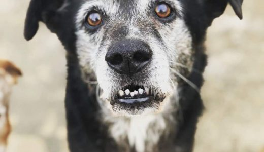 Pescara: Operazione X File per 70 cani!