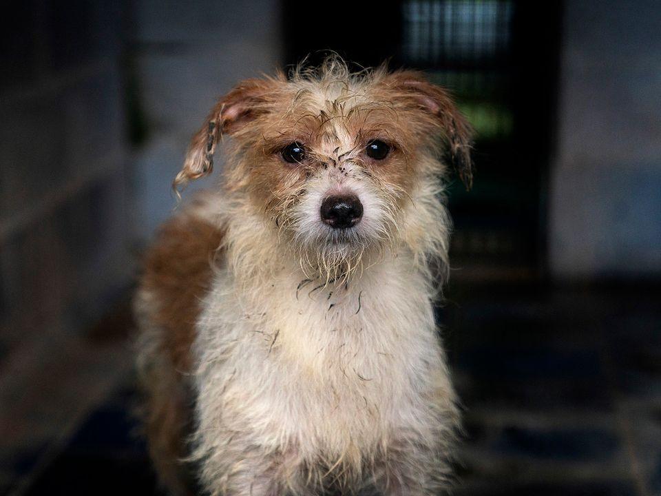38 Cani Ostaggio di un'Accumulatrice Compulsiva di Cani