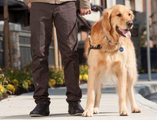UNI 11790 per Cani Educati e Proprietari Felici