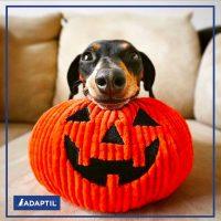 Croccantino o Scherzetto – Halloween a 4 zampe: festeggiare senza Paura