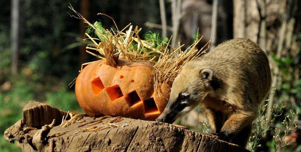 Halloween al BioParco di Roma