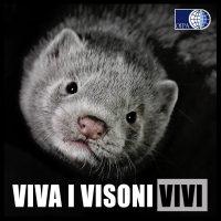 """CORONAVIRUS/ANIMALI. LA DANIMARCA UCCIDERÀ  UN MILIONE DI VISONI """"DA PELLICCIA"""""""