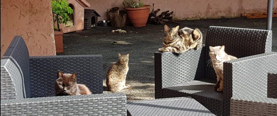 30 gatti abbondonati davanti al San Camillo di Roma