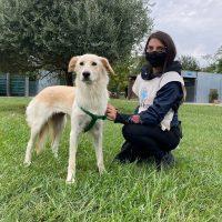 Emergenza COVID, aiuto agli animali  ENPA di Monza ancora in prima linea