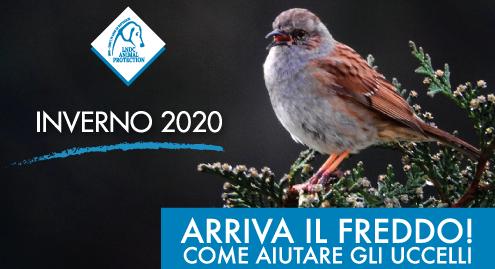 Come aiutare gli uccelli durante l'inverno con i consigli LNDC