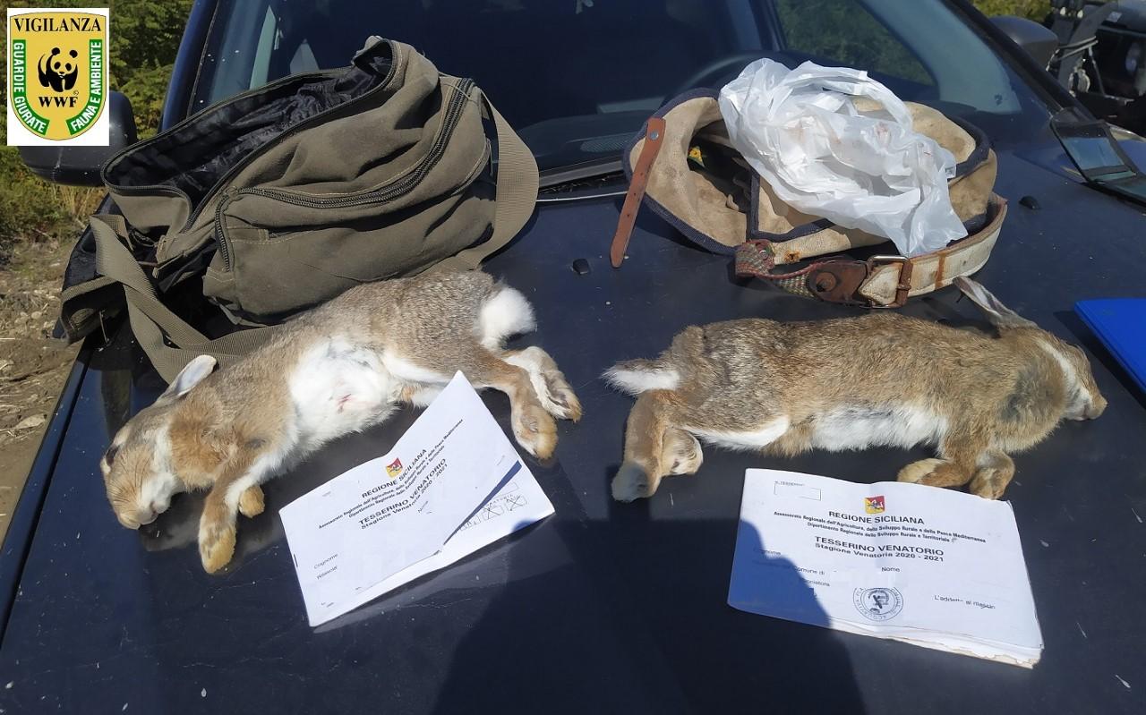 Cacciatori di Frodo, sparavano ai conigli, nonostante il divieto del TAR