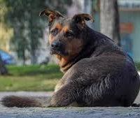 Max il cane Tarantino