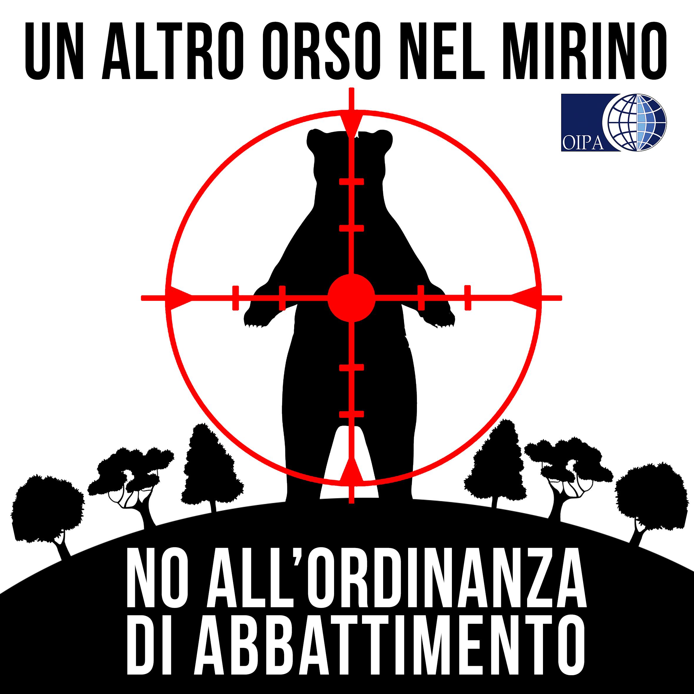 """Orsi del Trentino; Cosa dice realmente il Rapporto Ispra-Muse sui famosi """"Orsi Problematici"""""""