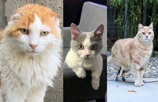 I 3 Gatti Milanesi più Famosi