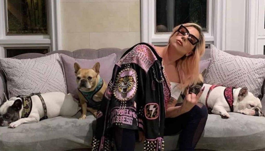 Lady Gaga: sparano al Dog Sitter e le rapiscono i cani.