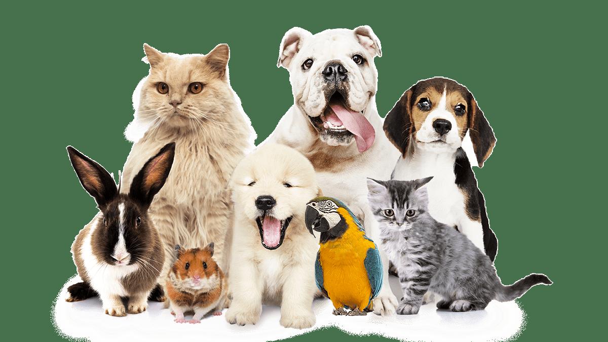 Pet & freinds